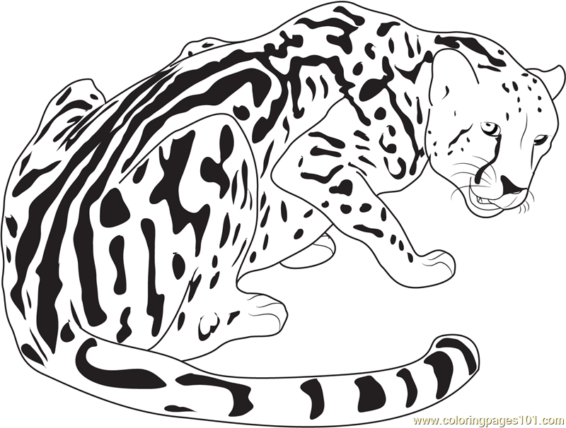 King Cheetah Coloring Page