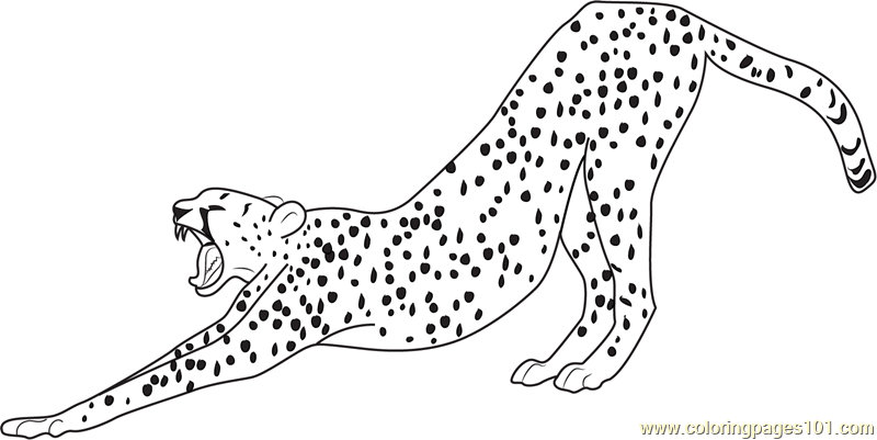 Stretching Cheetah Coloring Page Free Cheetah Coloring
