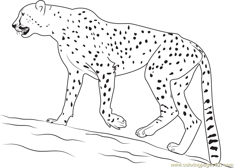 Walking Cheetah printable coloring page for kids and adults