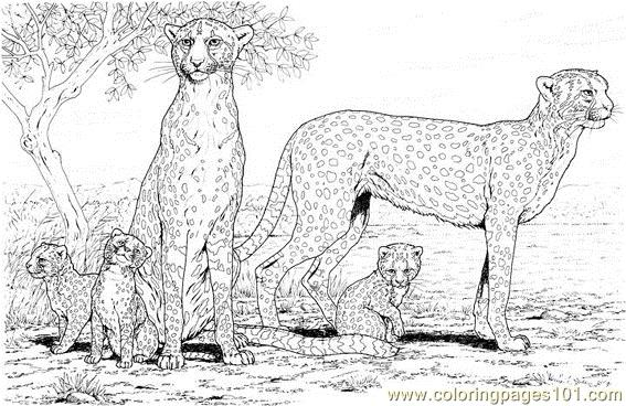 Cheetah Family Coloring Page Free Cheetah Coloring Pages