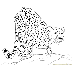 Adult Cheetah Free Coloring Page for Kids
