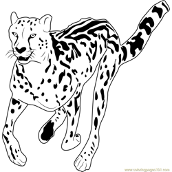 African Cheetah Free Coloring Page for Kids