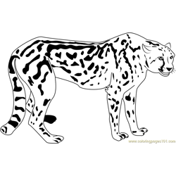 Beautiful Cheetah Free Coloring Page for Kids