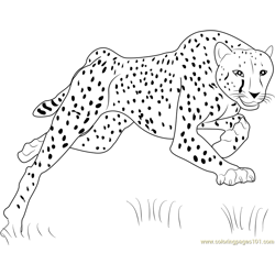 Bouncing Cheetah Free Coloring Page for Kids