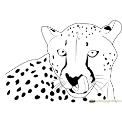 Cheetah Face Free Coloring Page for Kids
