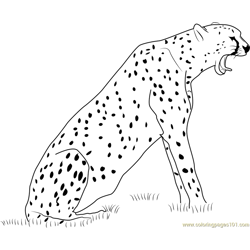 Cheetah Howling Free Coloring Page for Kids