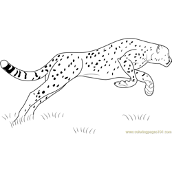 Cheetah Jumping Free Coloring Page for Kids