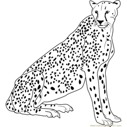 Cheetah Relaxing Free Coloring Page for Kids