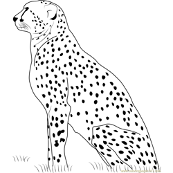 Cheetah Resting coloring page