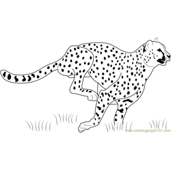 Cheetah Running Free Coloring Page for Kids
