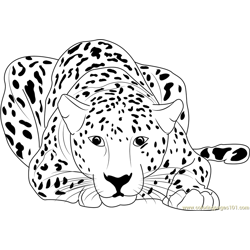 Cheetah Sitting Free Coloring Page for Kids