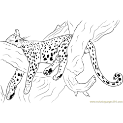 Cheetah Sleeping Free Coloring Page for Kids