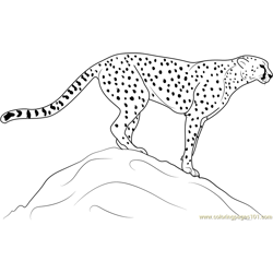 Cheetah Standing on Rock coloring page