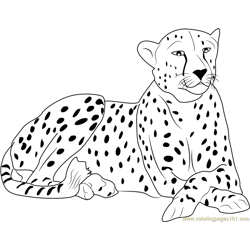 Cheetah Free Coloring Page for Kids