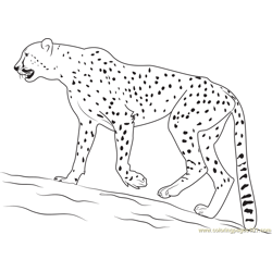 Walking Cheetah Free Coloring Page for Kids
