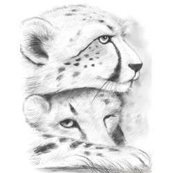 Cheetahs gregchapin Free Coloring Page for Kids