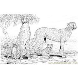 Cheetah family Free Coloring Page for Kids