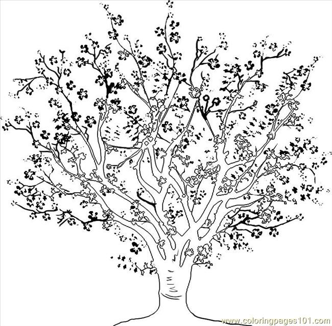 To Draw A Cherry Tree Step 4 Coloring Page