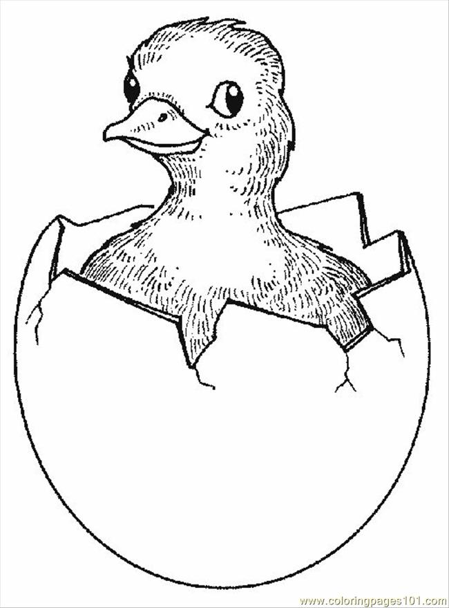 Chick1 Coloring Page