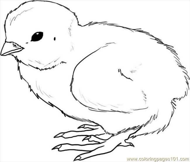 How To Draw A Chick Step 4 Coloring Page