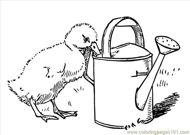 Res Pages Photo Chick Dl Coloring Page