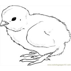 How To Draw A Chick Step 4