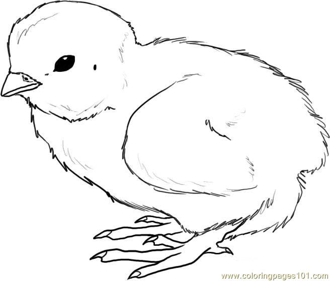 How to draw a chick step Coloring Page