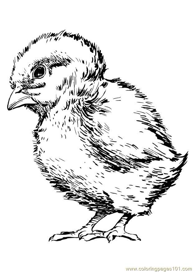 Little Chicken Coloring Page