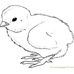 How to draw a chick step Free Coloring Page for Kids