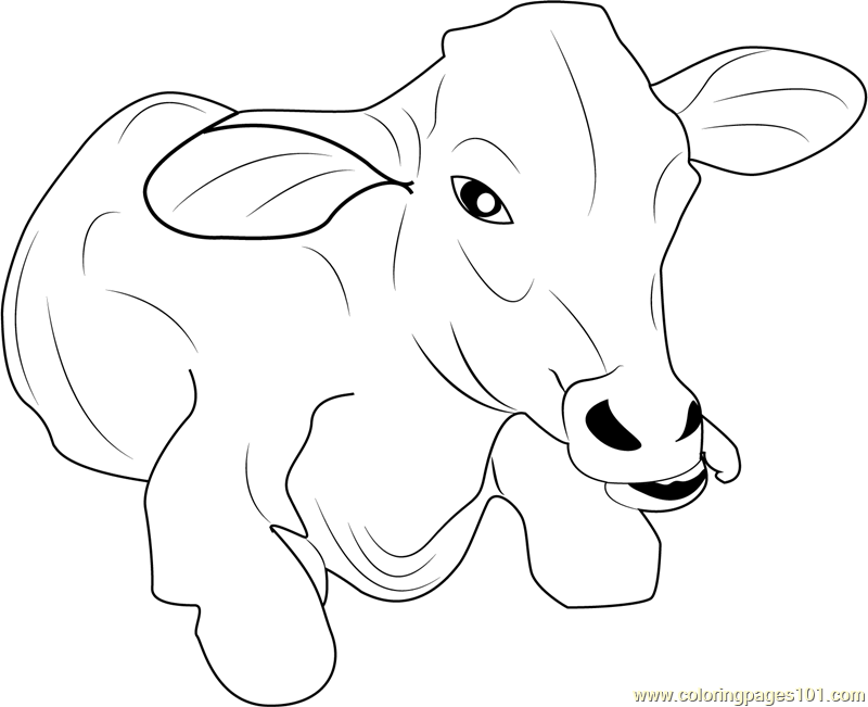 Baby Cow Coloring Page - Free Cow Coloring Pages ...