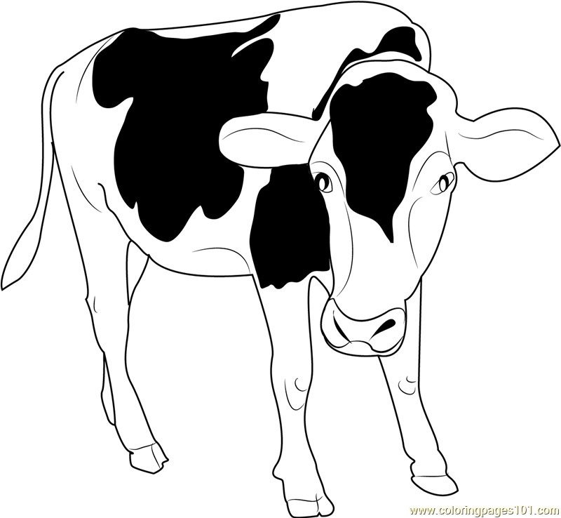 Cow cartoon black and white