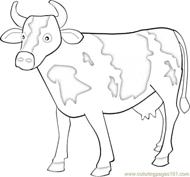 Longhorn coloring pages | Free Coloring Pages | 584x626