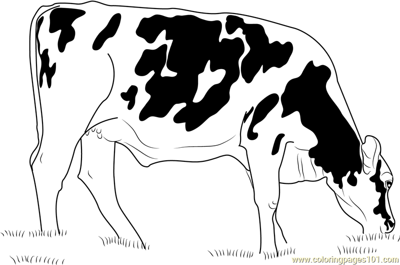 Cows Eating Grass Coloring Page
