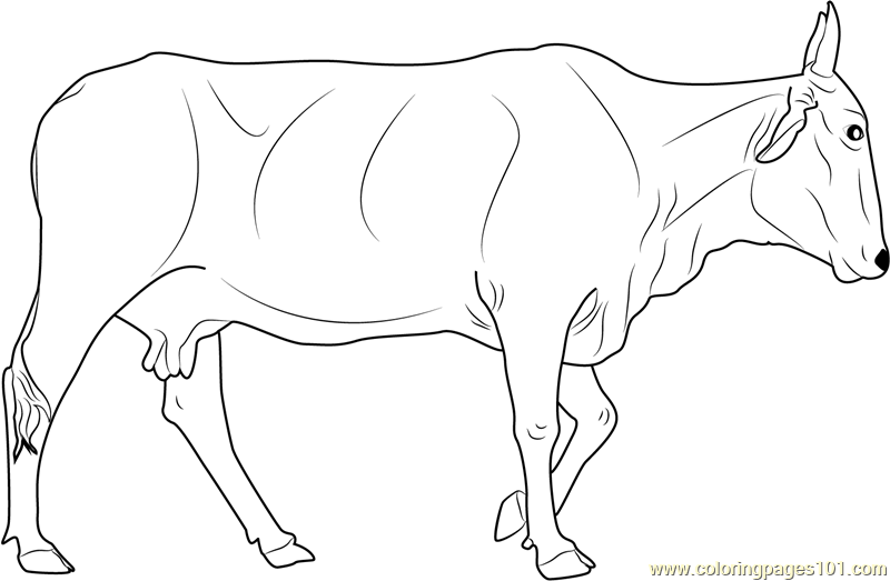 Holy Cow Coloring Page