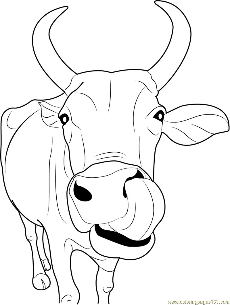 Indian Cow Face Coloring Page - Free Cow Coloring Pages ...