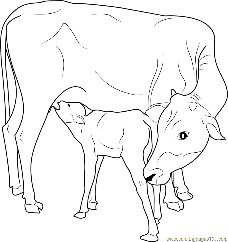 printable animal coloring pages calf | Indian Cow with Calf printable coloring page for kids and ...