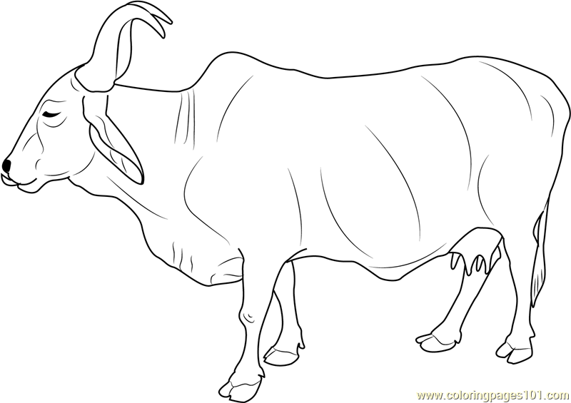 indian holy cow coloring page