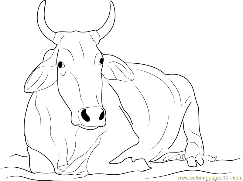 Khilari Cow Coloring Page