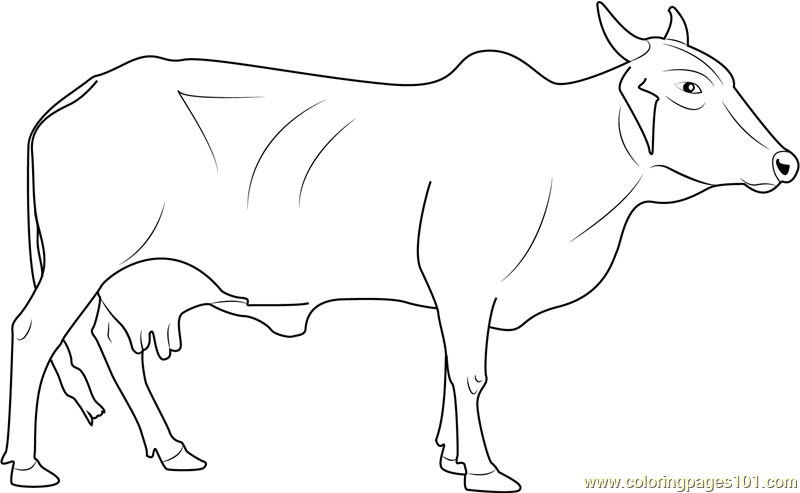 Red Sindhi Cow Coloring Page