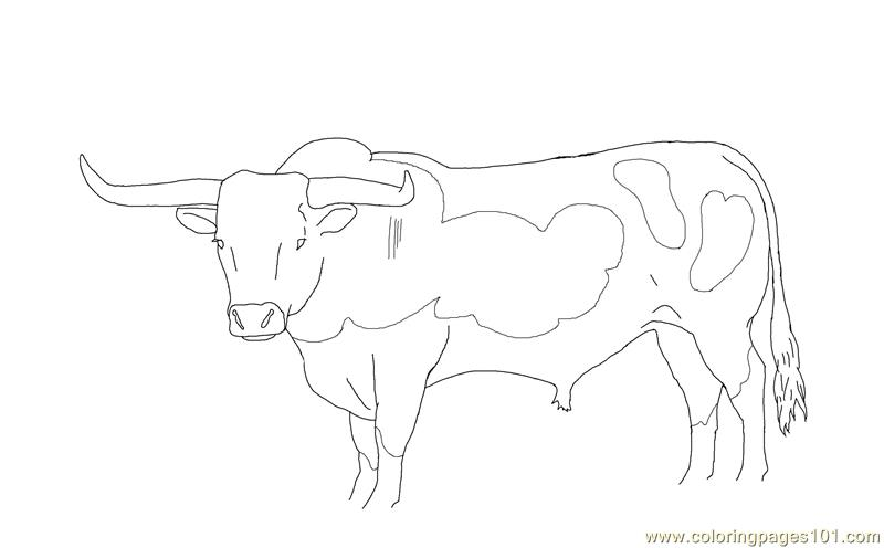 Longhorn bull Coloring Page Free Cow Coloring Pages