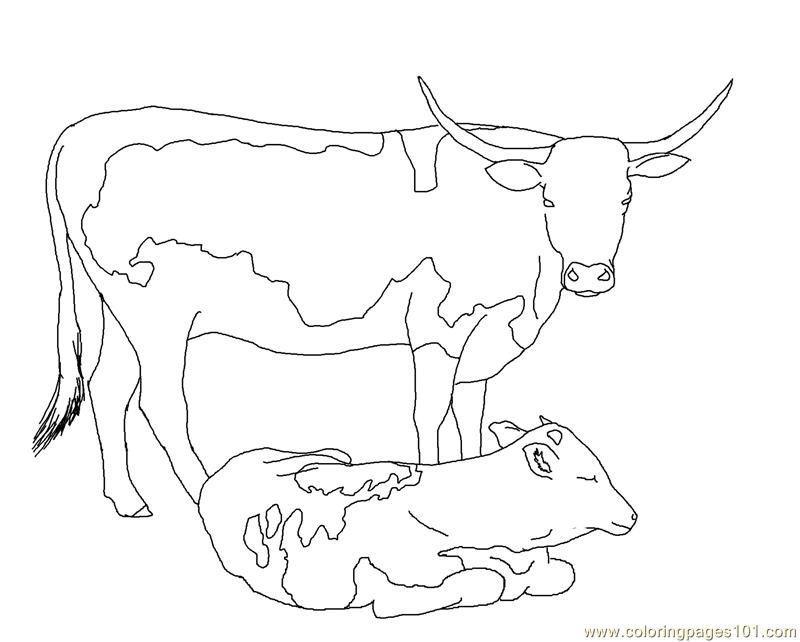 Longhorn Cow Calf Coloring Page