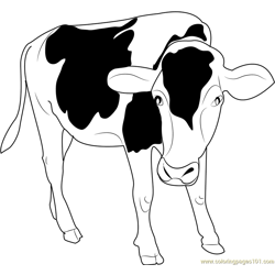 Black and White Cow Free Coloring Page for Kids