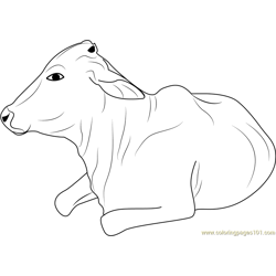 Cow take Sunbathing coloring page