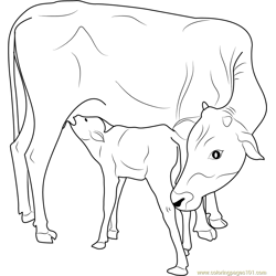 Indian Cow with Calf Free Coloring Page for Kids