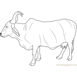 Indian Holy Cow Free Coloring Page for Kids