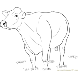 Jersey Dairy Cattle Free Coloring Page for Kids