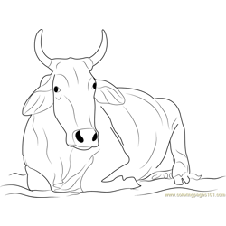 Khilari Cow Free Coloring Page for Kids