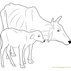 Malvi Cow Free Coloring Page for Kids