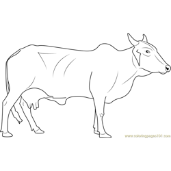 Red Sindhi Cow Free Coloring Page for Kids