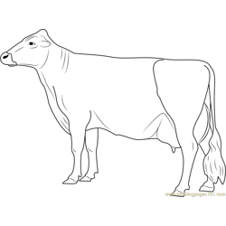 Vechur Cow Free Coloring Page for Kids